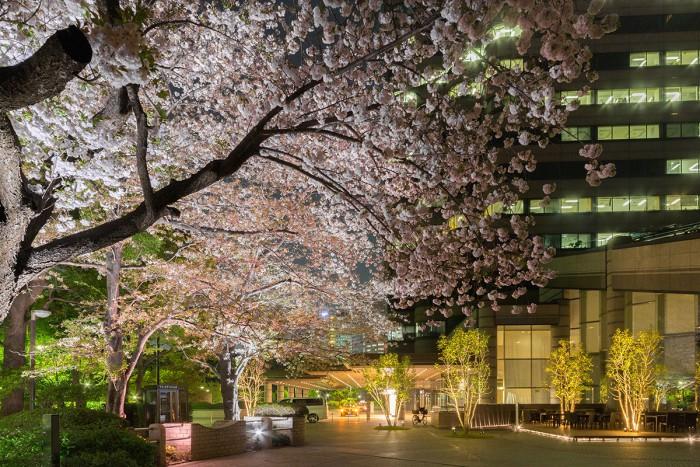 御殿山トラストシティの桜のライトアップ